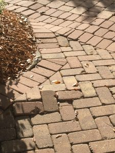Removing roots from under pavers - after