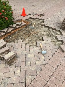 Removing roots from under pavers