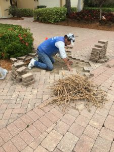 Removing roots from under pavers1